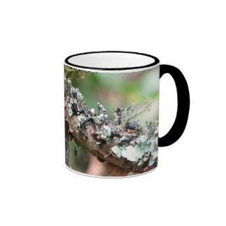 Musgo y liquenes taza de dos colores