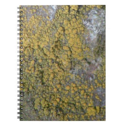 Musgos del liquen de los hongos de la flora de Ida Libros De Apuntes