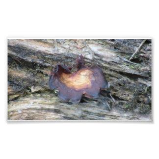 Musgos del liquen de los hongos de la flora de Ida Fotografia