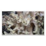 Musgos del liquen de los hongos de la flora de Ida Arte Fotografico