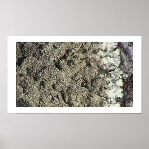 Musgos del liquen de los hongos de la flora de Ish Impresiones