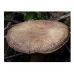 Musgos del liquen de los hongos de la flora de postal