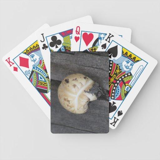 Musgos negros del liquen de los hongos de seta del barajas de cartas