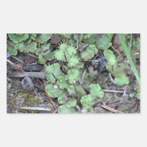 Musgos negros del liquen de los hongos de seta del pegatina rectangular