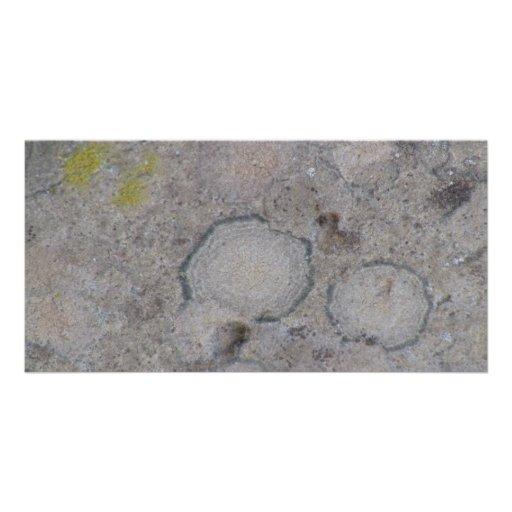 Musgos negros del liquen de los hongos de seta del tarjeta con foto personalizada