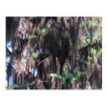Musgos negros del liquen de los hongos de seta del postal