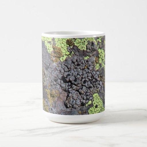 Musgos negros del liquen de los hongos de seta del taza de café