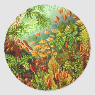 Musgos Pegatina Redonda