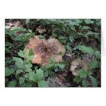 Mushroom12 Greeting Card