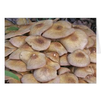 Mushroom2 Card