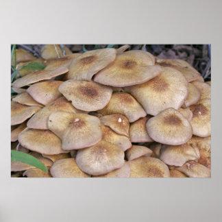 Mushroom2 Poster