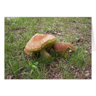 Mushroom7 Card