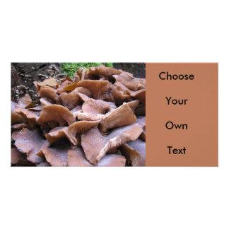 Mushroom #4 photo cards
