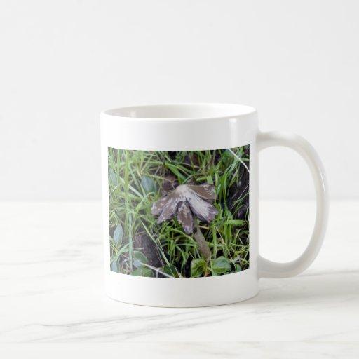 Mushroom A Frayed Coffee Mug