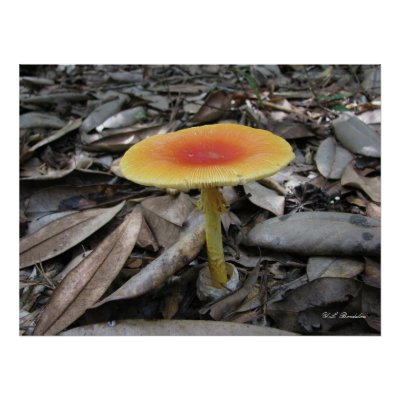Mushroom Amanita caesarea print