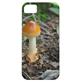 Mushroom Beauty Of The Composed Filament iPhone SE/5/5s Case