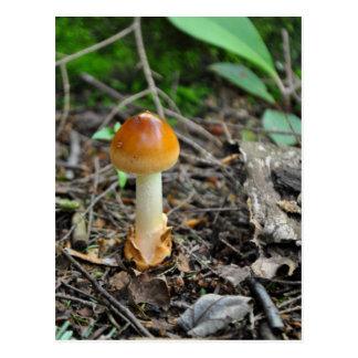 Mushroom Beauty Of The Composed Filament Postcard