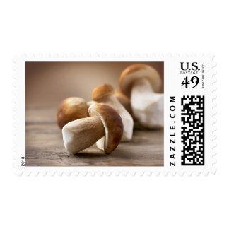 Mushroom Boletus Over Wooden Background. Autumn Postage Stamps