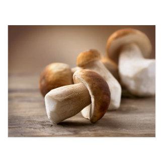 Mushroom Boletus Over Wooden Background. Autumn Postcard