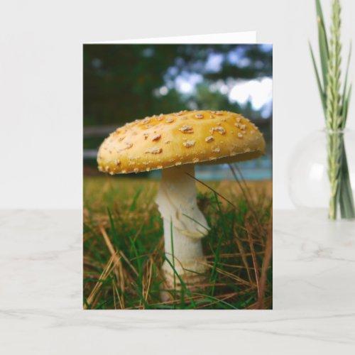 Mushroom Card card