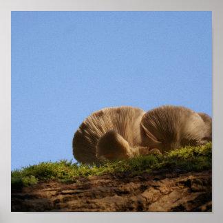 Mushroom clouds in Bromham park Posters