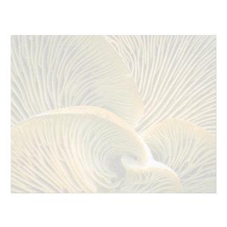 Mushroom cluster on a dead tree letterhead