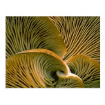 Mushroom cluster on a dead tree postcard