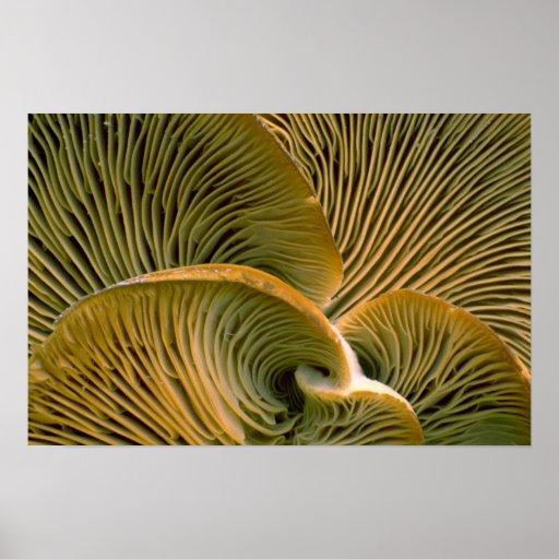 Mushroom cluster on a dead tree poster