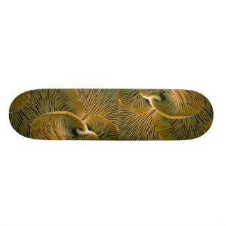 Mushroom cluster on a dead tree skateboard