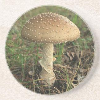 Mushroom Coaster