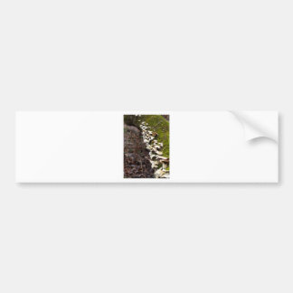 mushroom_downed tree_moss_winter bumper sticker