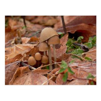 Mushroom Family Postcard