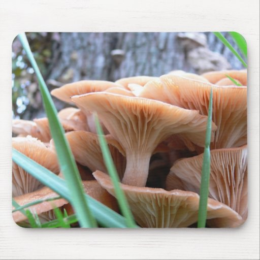 Mushroom Forest Card Mouse Mat