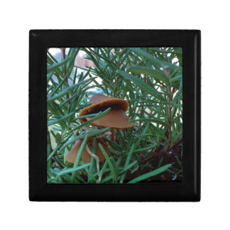 Mushroom Forest Gift Box