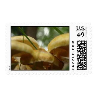 Mushroom Forest Stamps