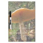 Mushroom Giant; 2013 Calendar Dry-Erase Whiteboard