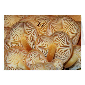 Mushroom Gills of the Orange Mycena Stationery Note Card
