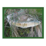 Mushroom Gills Postcard