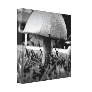 Mushroom in B/W Canvas Print