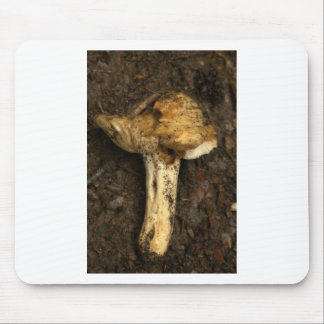 mushroom in the dirty mud mouse pad