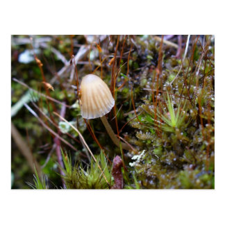 Mushroom in the Moss, Unalaska Island Postcard