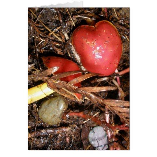 Mushroom Love Too Card
