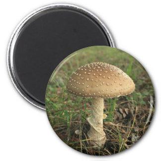 Mushroom Fridge Magnets