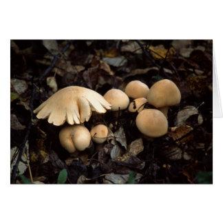 Mushroom Moon Card