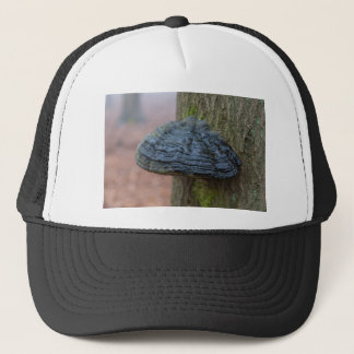Mushroom on a tree trunk in the forest trucker hat