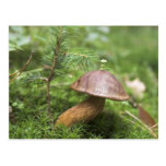 Mushroom On Moss Postcards
