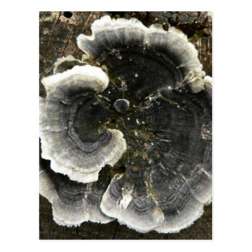 Mushroom On Tree Post Card