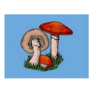 Mushroom Painting Postcard