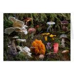 Mushroom Paradise Card