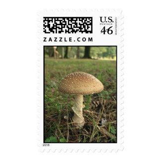 Mushroom Postage Stamps
